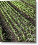 Fertile Farmland Metal Print