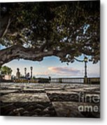 Ficus Magnonioide In The Alameda De Apodaca Cadiz Spain Metal Print