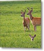Field Deer Metal Print