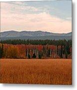Field In Yellowstone Metal Print