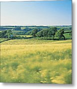 Field Near Barnstaple, North Devon Metal Print