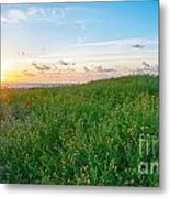 Field Of Flowers At Sunrise  Metal Print by Tammy Smith