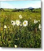 Field Of Flowers Metal Print by Les Cunliffe