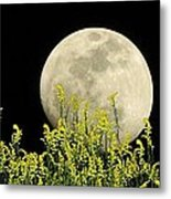 Field Of Gold By Moonlight Metal Print