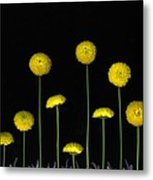 Field Of Gold Metal Print