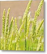 Field Of Grass And Wildflowers II Metal Print by Artist and Photographer Laura Wrede