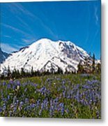 Field Of Lupines And Rainier Metal Print