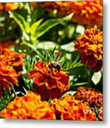 Field Of Marigolds Metal Print