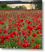 Field Of Poppies At The Lake Metal Print