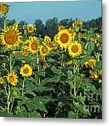 Field Of Smiley Faces Metal Print