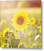 Field Of Sunshine Metal Print