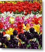 Field Of Tulips Ll Metal Print