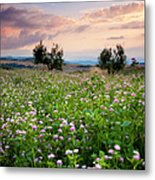 Field Of Wildflowers Metal Print