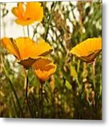 Field Of Yellow Poppies Metal Print