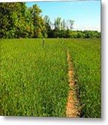Field Path Metal Print