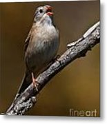 Field Sparrow Pictures 23 Metal Print