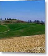 Field With Cypress Trees Metal Print