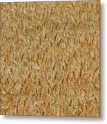 Fields Of Grain Metal Print