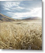 Fields Of Grass In Nevada Desert Metal Print