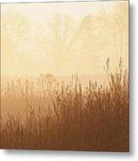 Fields Of Tall Grass In The Mist Metal Print