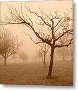 Fields Of Trees Metal Print