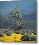 Fields Of Yellow Foxglove Metal Print