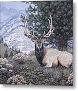 Fields Peak Elk Metal Print