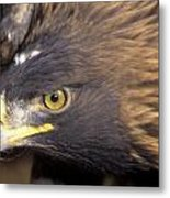 Fierce Golden Eagle Metal Print