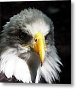 Fierce Pride Metal Print