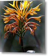 Fiery Flower Metal Print
