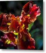 Fiery Iris Metal Print