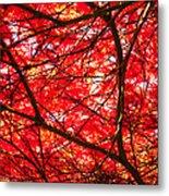 Fiery Maple Veins Metal Print
