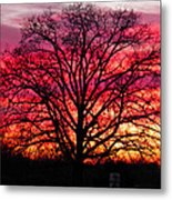 Fiery Oak Metal Print