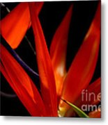 Fiery Red Bird Of Paradise Metal Print