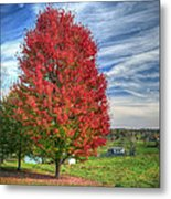 Fiery Red Maple Metal Print