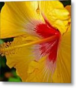 'fifth Dimension' Hibiscus Metal Print
