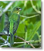 Fifty Shades Of Green Metal Print