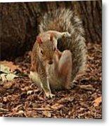 Fighter Squirrel Metal Print