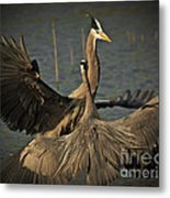 Fighting Great Blue Herons Metal Print