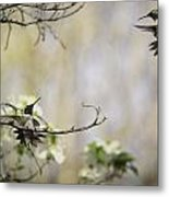 Fighting Ruby Throated Hummingbirds Metal Print