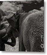 Fiighting Elephants Metal Print