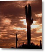 Film Homage Orson Welles Saguaro Cacti The Other Side Of The Wind Carefree Arizona 2004 Metal Print