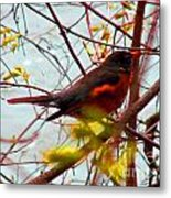 Finch In Springtime On A Very Windy Day Metal Print
