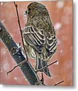 Finch On A Snowy Day Metal Print