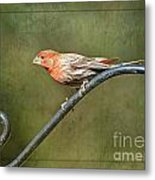 Finch On Guard I Metal Print