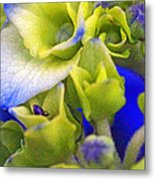 Find Ant Hydrangea Metal Print