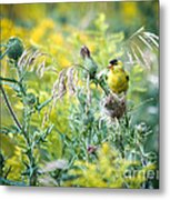 Find The Finch Metal Print