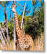 Find The Giraffe Metal Print
