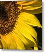 Find The Spider In The Sunflower Metal Print