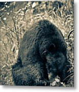 Finding A Way To Get The Suet Metal Print